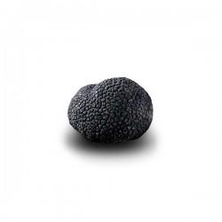 Truffe Noire Fraîche d'Hiver du Périgord (Tuber Melanosporum) de 37,5g +/-2,5g