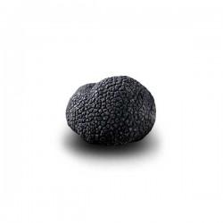 Truffe Noire Fraîche d'Hiver du Périgord (Tuber Melanosporum) de 42,5g +/-2,5g