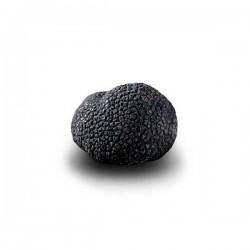 Truffe Noire Fraîche d'Hiver du Périgord (Tuber Melanosporum) de 47,5g +/-2,5g